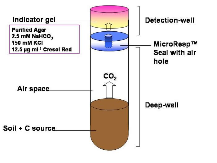 Schematic Diagram of Colorimetric Method